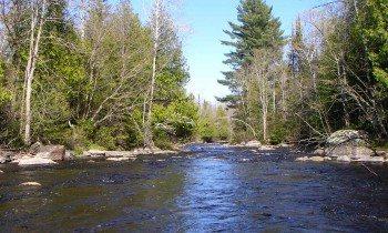 Peshtigo River Wisconsin brown trout fishing
