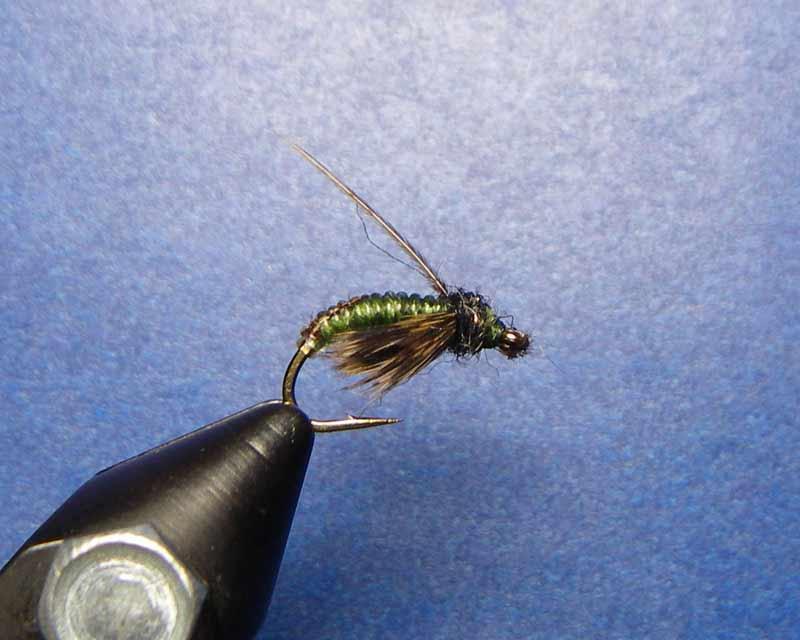 Aidans Pupa fly pattern