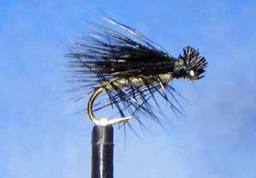Little Black Caddis